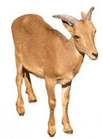 cash goat says: payday loans are baaad